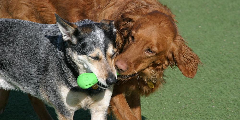 Jack & Layla