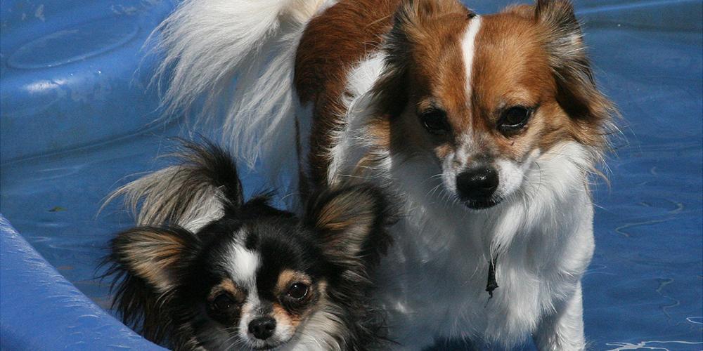 Luckie & Petie