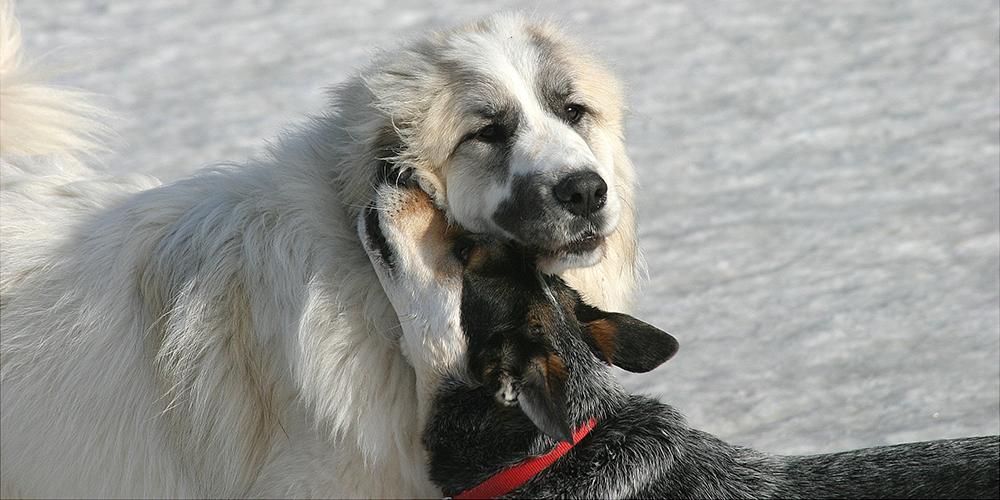 Molly & Jack