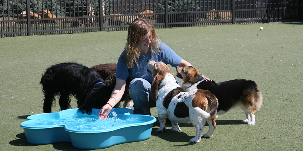 Employee with dogs