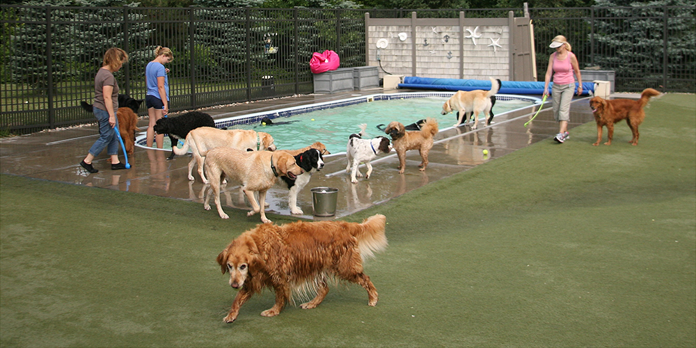 Dogs playing by pool