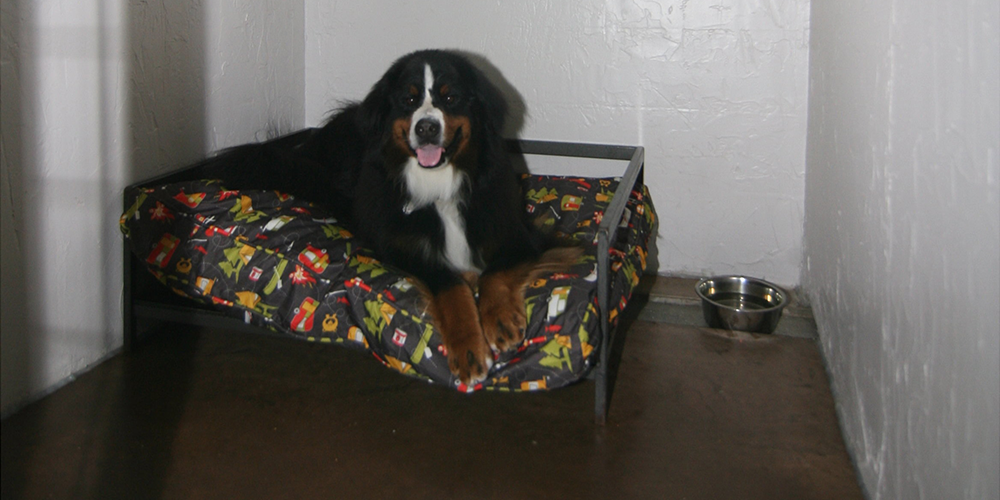 Dog Bed 2