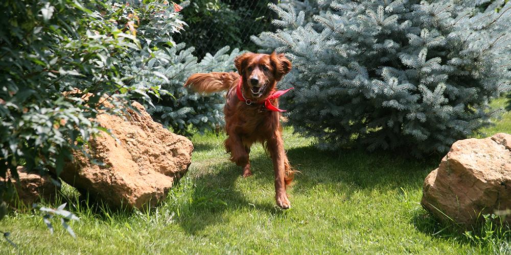 Senior Dog Garden 2
