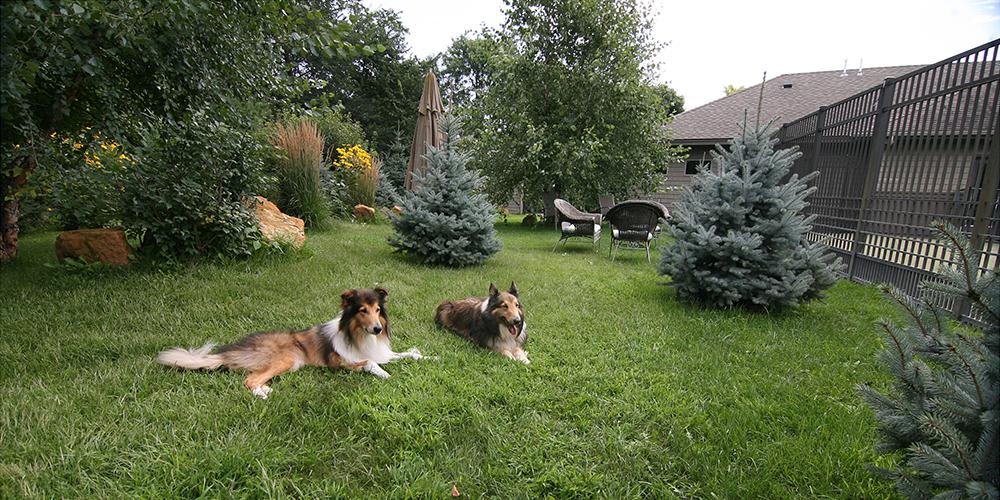 Senior Dog Garden 3