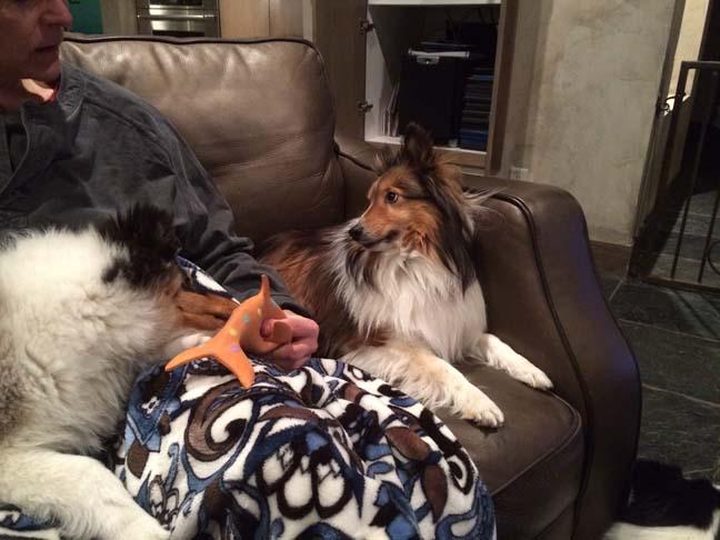 Rebel glaring at mom & puppy