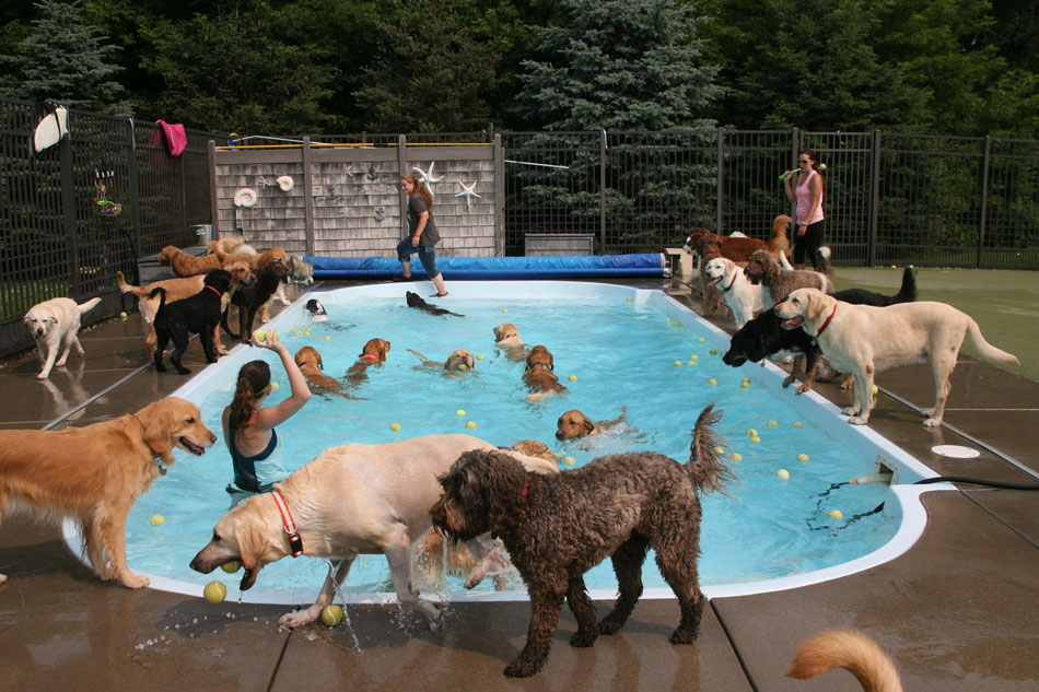 Pool filled with dogs