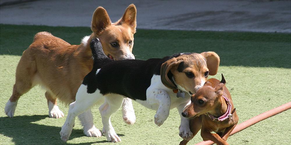 Baxter,Greta,Charlie