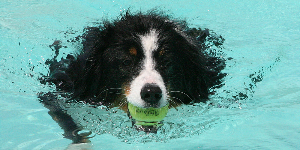 Bunkers swimming with ball