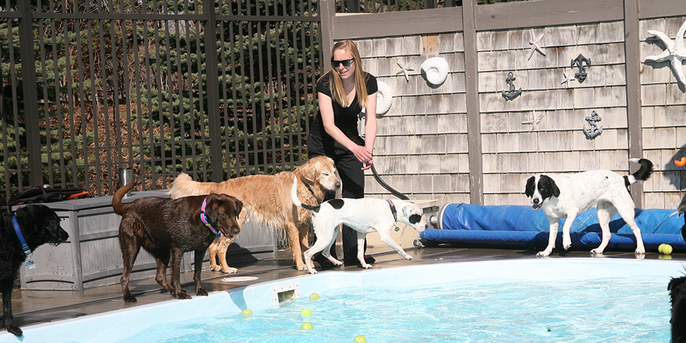 Dogs by pool