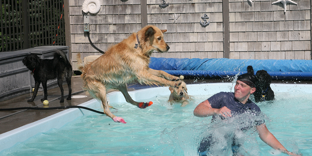 Employee in pool