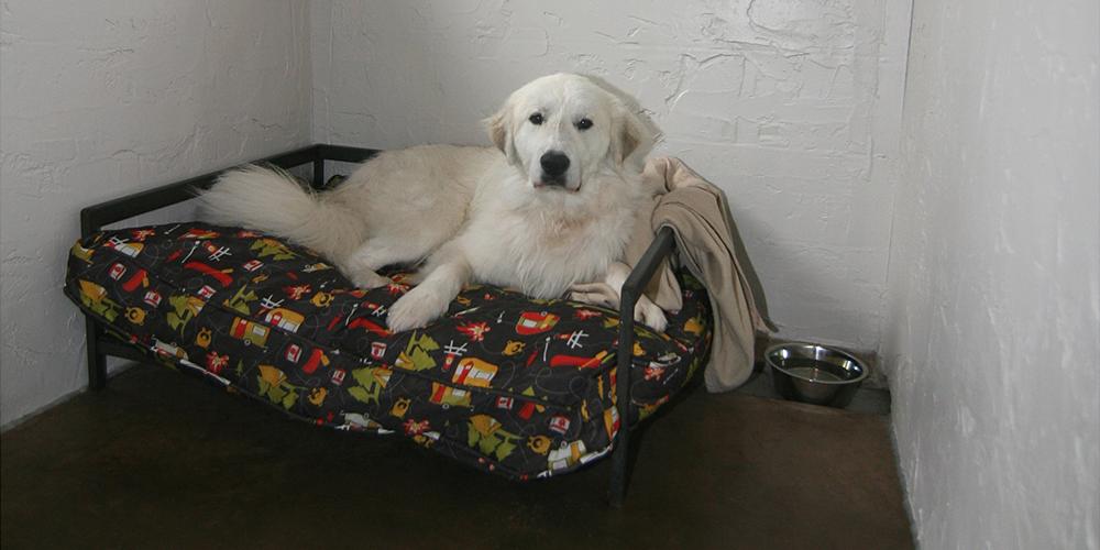 Dog Bed 3