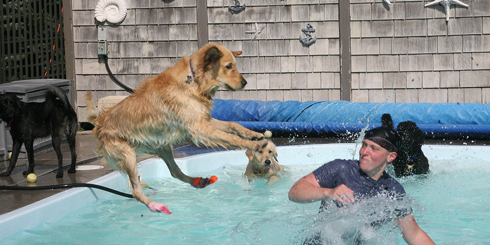 dog boarding and daycare services
