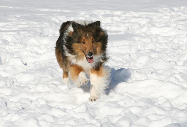 Running off leash