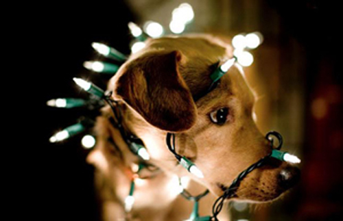 Dog in Christmas lights